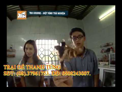 Yan Tivi Kim Nhã và Quang Bảo Ăn Dế Cơm Tại Trại Dế Thanh Tùng