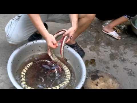 Cách chế biến thịt rắn rất đơn giản.