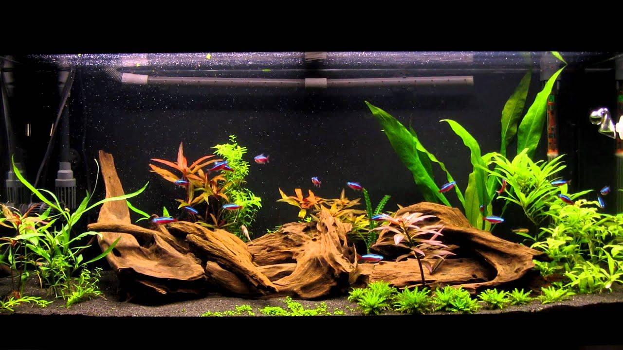 Посадка растений аквариум, правильная посадка аквариумных 58