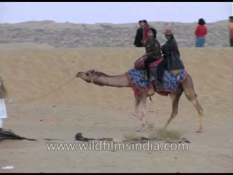 Thar Desert safari on camels near Jaisalmer