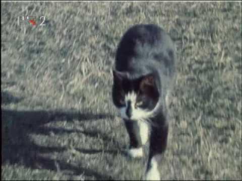 Žestoke priče - Svinjokolja (1975) - 1/4
