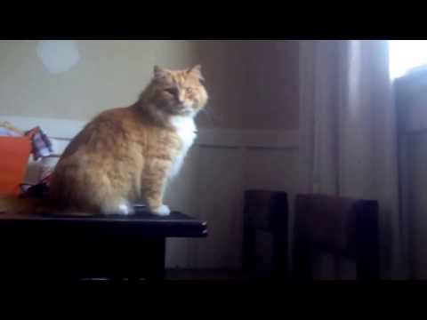 Skimbles - Epic Cat Fail