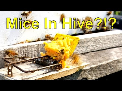 Is Your Bee Hive Ready For Winter? + Bloopers