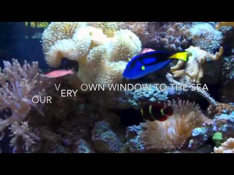 Custom Living Reef Aquarium by Infinity Aquarium of Las Vegas