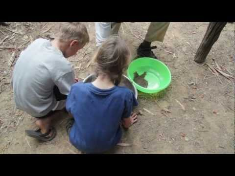 The Mekong River Journey: Baby Softshell Turtles Head Home