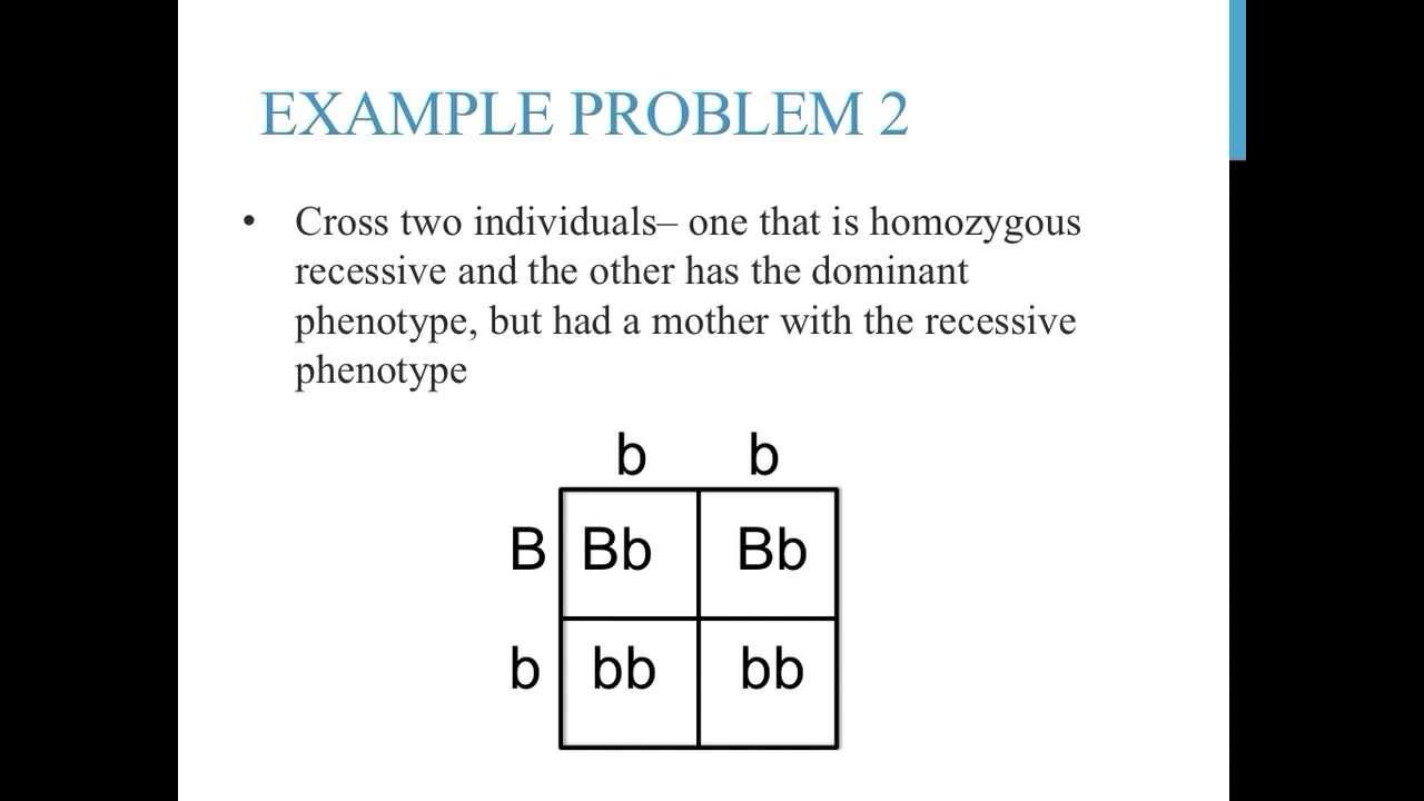 punnett square practice problems simple youtube. Black Bedroom Furniture Sets. Home Design Ideas