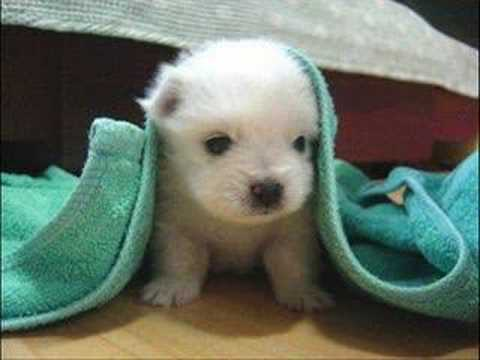 Cute dogs and puppies, http://www.basicdogcare.com Cute dogs and puppies presented by Basic Dog Care.