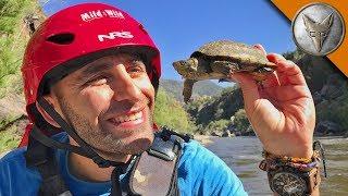 White Water Turtles!