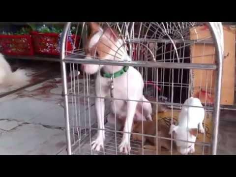 Những con chó cảnh rất đẹp và đáng yêu - Chó Cảnh - Đàn chó - Beautiful dog
