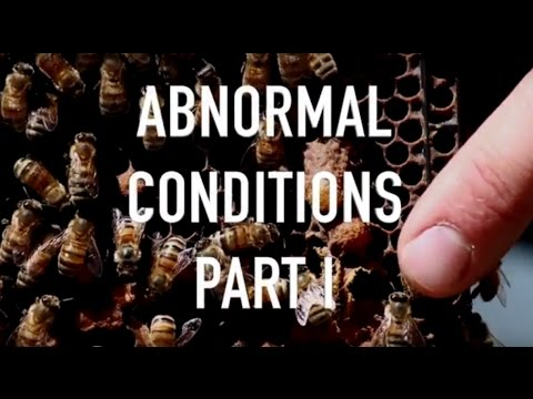 Abnormal Conditions Part I - Failed Queens and Chalk Brood
