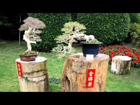 2014全國盆栽展覽(2014Taiwan Bonsai Exhibition)