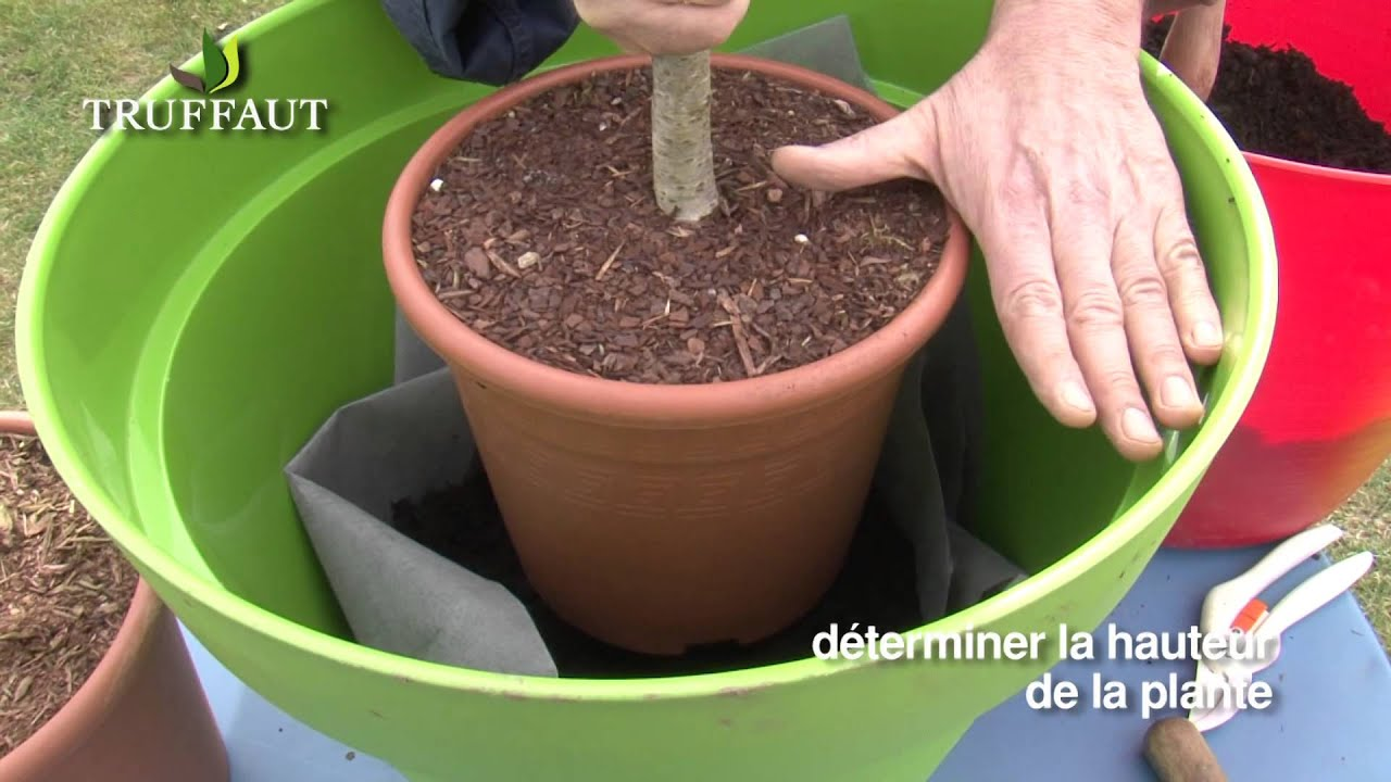 Fruitier en pot plantation et entretien youtube - Arbre en pot ...