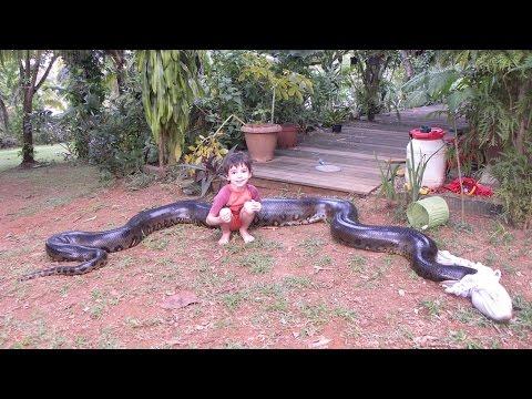 Фаќањето на 5 метри долгата анаконда која го изела кучето на комшијата