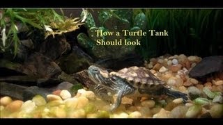All comments on Turtle Tank Setup