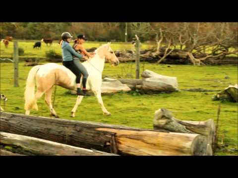 Crazy fun with the horses!