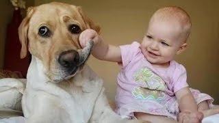 Bebés y perros - Videos de risa
