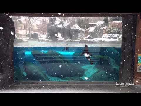 Snow globe moments at the Saint Louis Zoo