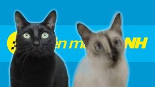 Điện Máy Xanh Phiên Bản 2 Con Mèo-[Kevo Plus]