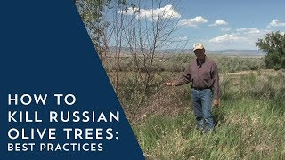 How To Kill Russian Olive Trees Best Practices