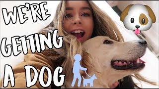 WE'RE GETTING A DOG ALEX! VLOGMAS DAY 9!