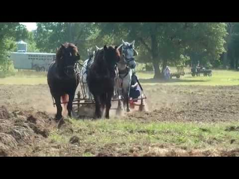 Plow Day, Wagram, N.C. North Carolina Work Horse and Mule Associtaion