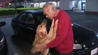 Man Whose Car Was Stolen With Dog Inside Was Thrilled to Get His Pet Back
