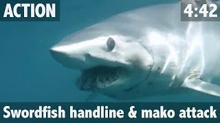 GIANT SHARK ATTACKS SWORDFISH!