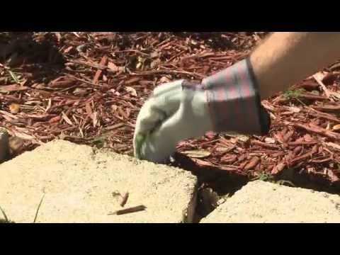 Three Ways to Control Landscape Weeds - Ace Hardware