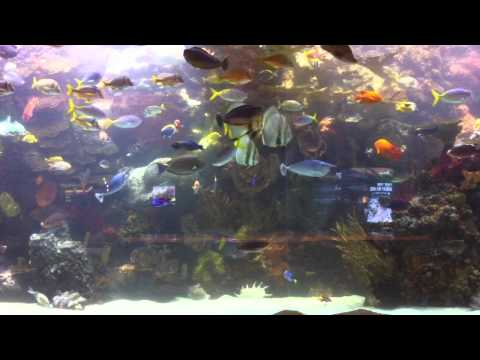 Huge aquarium from the hotel Mirage in Las Vegas 20,000 gallon