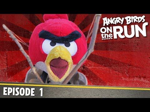 44/5000 Angry Birds- Na útěku - 1 - Na druhé straně