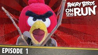 Angry Birds- Na úteku - 1 - Na druhej strane