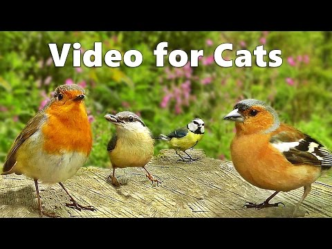 Videos for Cats to Watch : Bird Song in Springtime Extravaganza Cat Videos