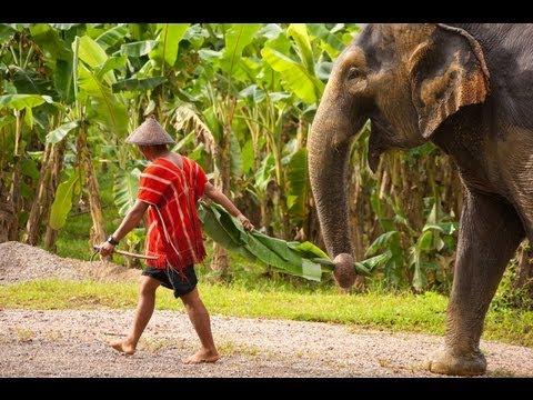 Khao Sok Nationalpark - Thailands beliebtester NP