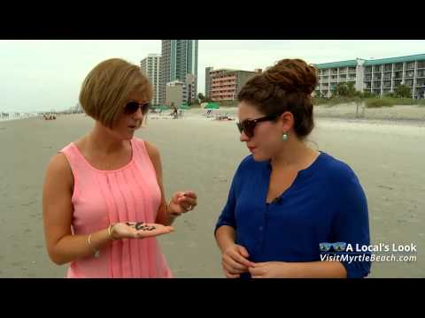 Shark Tooth Hunting Tips From Myrtle Beach, South Carolina
