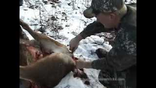 How To Gut And Skin A Deer