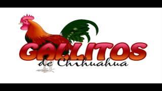 Luna Llena Los Gallitos De Chihuahua 2013-2014