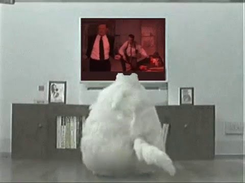 Fat Cat Dancing - YouTube