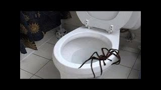 Giant spider attacks and chases two men! (WARNING)