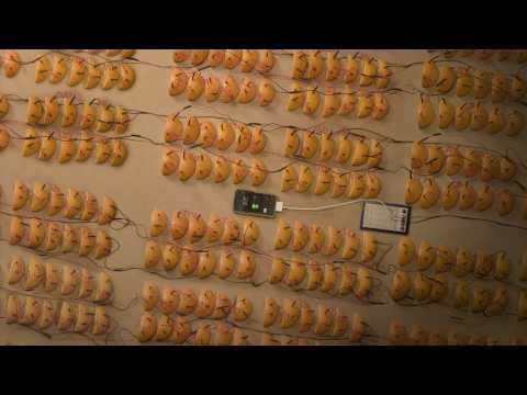 Видео дня: зарядка iPhone апельсинами