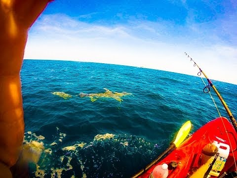 Lone Man Gets Towed For Miles in Kayak By 11 Foot Hammerhead Shark