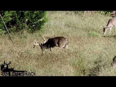 Bang Whitetail Deer Hunting Ranch - Fredericksburg, Texas