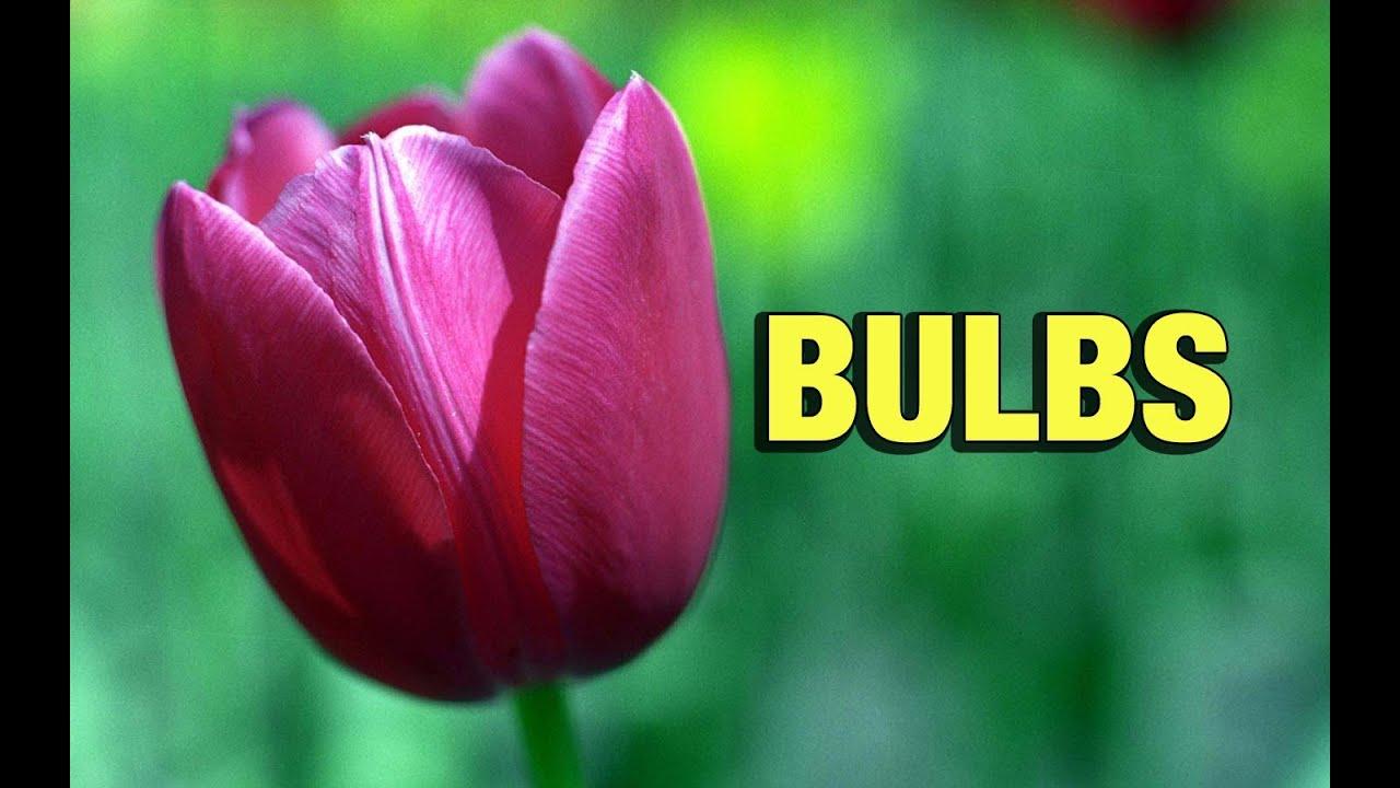 Cdjb how to plant your bulbs youtube for Centre de jardin brossard