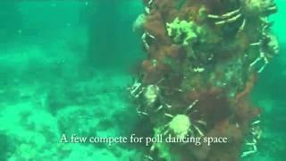 Crabs Take Over Ocean Floor.mp4