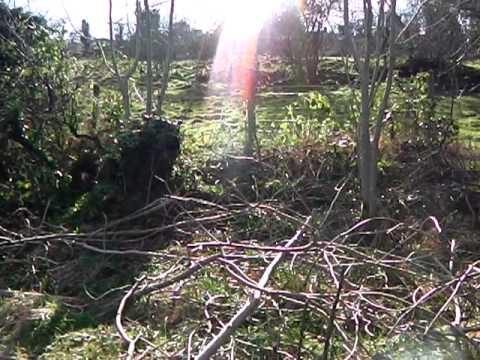 Permaculture Orchard Progress