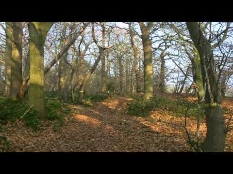 Hainault Forest Country Park Chingwell Essex