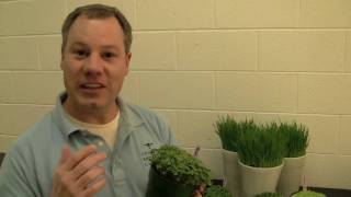Growing Microgreens And Sprouts At Home