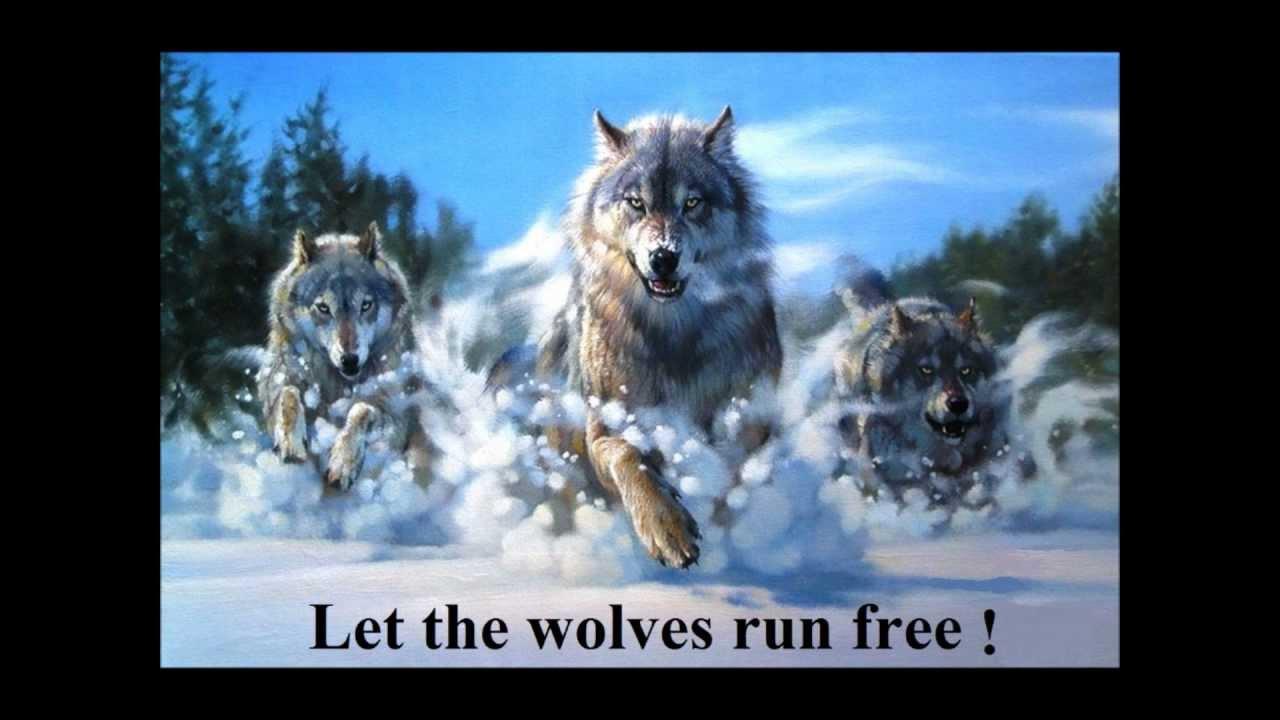 free wolf run
