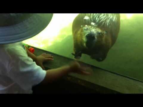 Ryan waves at beaver at oregon zoo