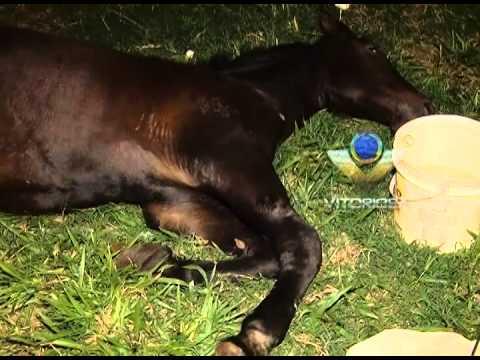 Égua machucada em um campinho de futebol no bairro Seringueiras