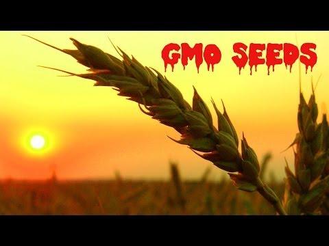 China Stealing American GMO Seeds   China Uncensored